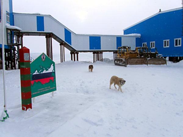 У пограничных собак в Арктике важная миссия: они сторожат заставу от белых медведей. Последние нарушают границу во льдах гораздо чаще, чем люди.